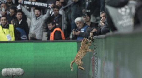 'Kat' twaalfde man van Besiktas