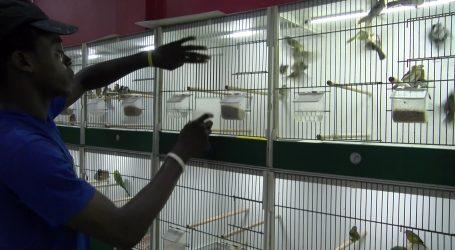 Zangvogel soorten in Suriname