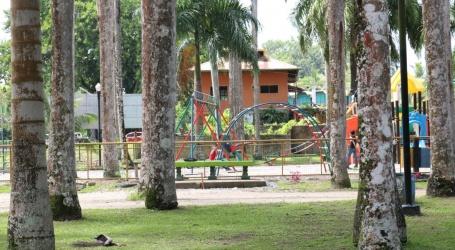 Face lift voor Palmentuin