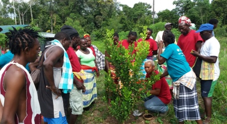 Tropenbos Suriname en LVV verruimen landbouwkennis bij de bewoners te Pikin Slee