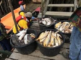 LVV staat achter ordening visserijsector