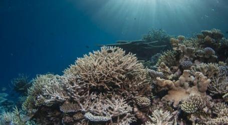 Australië vreest voor nieuwe verbleking van koraal op Great Barrier Reef