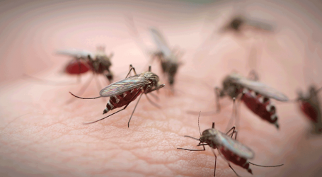 BOG verricht bespuiting werkzaamheden met behulp van de ' Dengue Wagen'