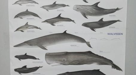 Bijzondere zeedieren van Suriname