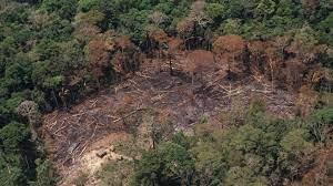 Brazilie eist $ 1 miljard om Amazone ontbossing te stoppen